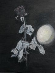 Mein Freund der Rose Venus.