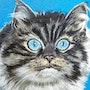 Le trés joli chat de ma voisine des yeux superbes. Jacquie