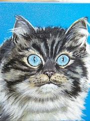 Le trés joli chat de ma voisine des yeux superbes.