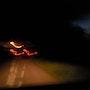 Oiseaux de feu, de nuit. Domi Roca