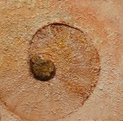 Variation minérale à l'ammonite.