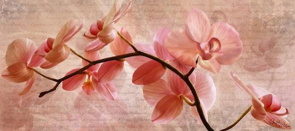 Les orchidées. Christelle D. Aitsiali Christelle D-Aitsiali