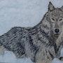 Loup des neiges. Odile Vixège