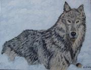Loup des neiges.