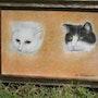 Nos amis les chats. Anny Valadon
