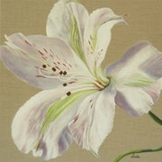 Alstroemeria, 1.