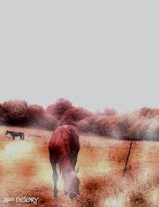 Horses in the Fog. Alain Delory