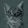 Chatte 2 mois 1/2 Léa. Philippe Flohic