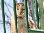 Chat sous les barreaux.