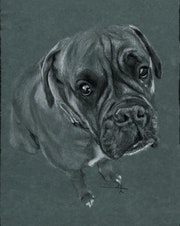 Chien boxer. Philippe Flohic
