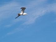 Foto -El vuelo. M. Pilar