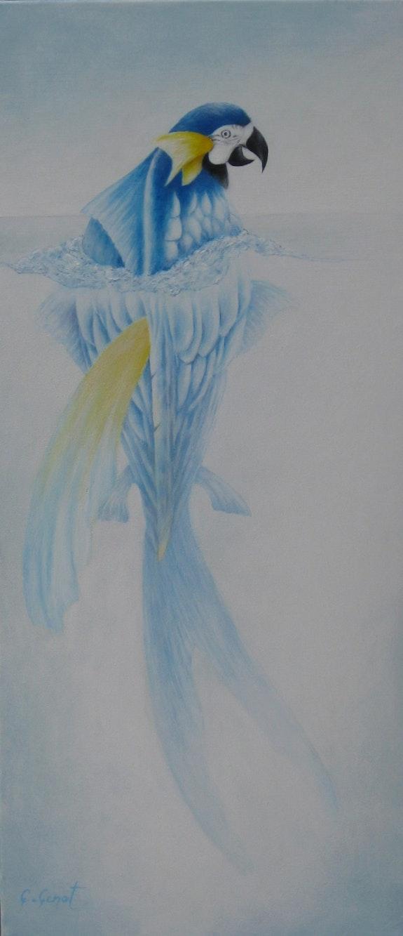Métamorphose. C. Cenot C. Poincenot