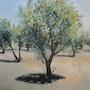 Soleil, vent et olivier.