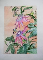 La passiflore ou Fleur de la passion aquarelle botanique. Françoise-Elisabeth Lallemand