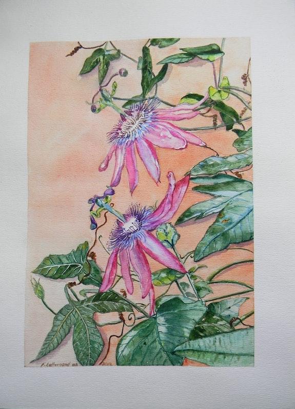 La passiflore ou Fleur de la passion aquarelle botanique. Françoise-Elisabeth Lallemand Françoise-Elisabeth Lallemand