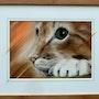 L'oeil du chat. Michèle Epinette