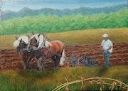 Les chevaux au labour.