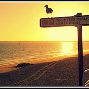 Sunlight and Seagull - Sur la plage. Val Gerbaud