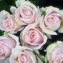Rose en bouquet. Marc Lejeune