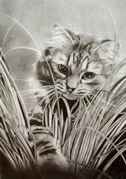 Tableau chat au graphite.