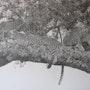 Groupe de léopards sur un acacia. Jean Camoin