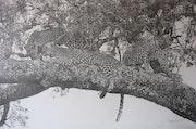 Groupe de léopards sur un acacia.