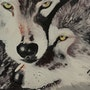 Couple de loups. Sandra Schneider