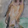La hulotte (aquarelle et plume) pour Matthieu. Ghislaine Phelut
