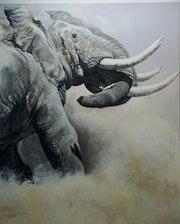 Combat de deux grands mâles à Amboseli.