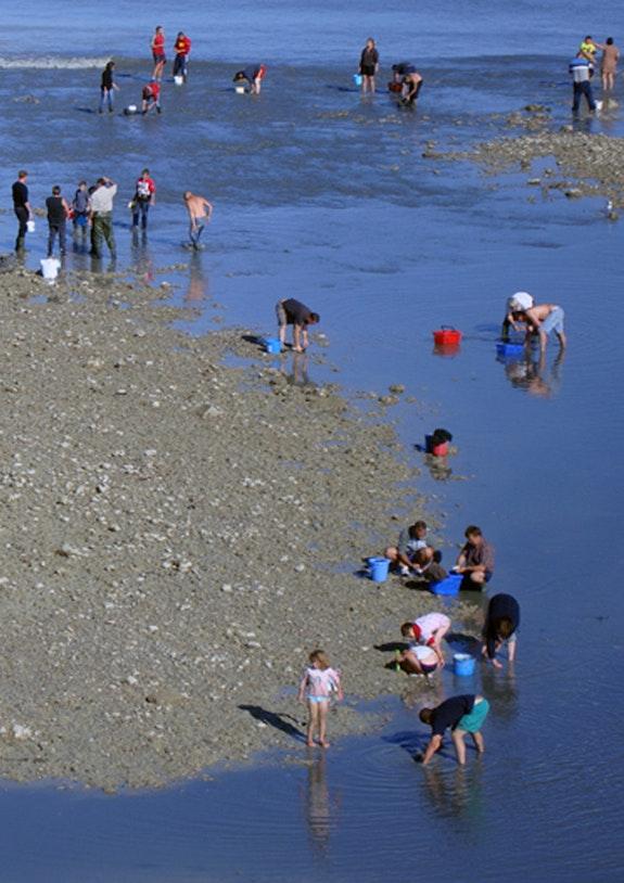 Pêcheurs à pieds à marée basse. Michel François Duc Alias Artistenvues Mfd