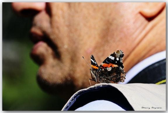 Friendship With Butterfly.  C. Deniz Seyran