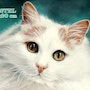 Petit chat blanc. Richard Van Lierde