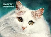Petit chat blanc.