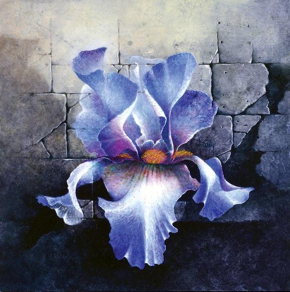 Iris de pierre. Jn Riou Jean-Noel Riou
