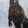 Ursus arctus horribilis. Julie Salmon