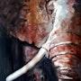 Eléphant vue d'en face.. Laurent Colsenet