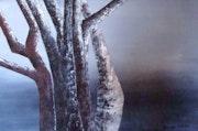 Foret de troncs en hiver.