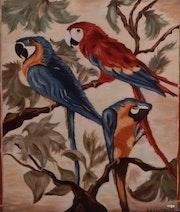 Perroquets du Brésil.