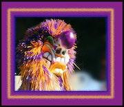 Couleurs du Carnaval de Bâle. Manha