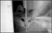 Le chat dans la vitrine.