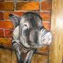 Shu, cochon vietnamien. Brigitte Leleu