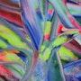 Paint & canvas #5. Finch Art