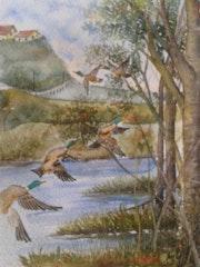 Canards par dessus l'étang.