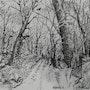 Chemin en sous bois. (Réalisation crayon à l'encre de chine). André Farnier