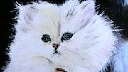 Mon chat angora.
