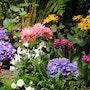 Spring flowers. Willssb
