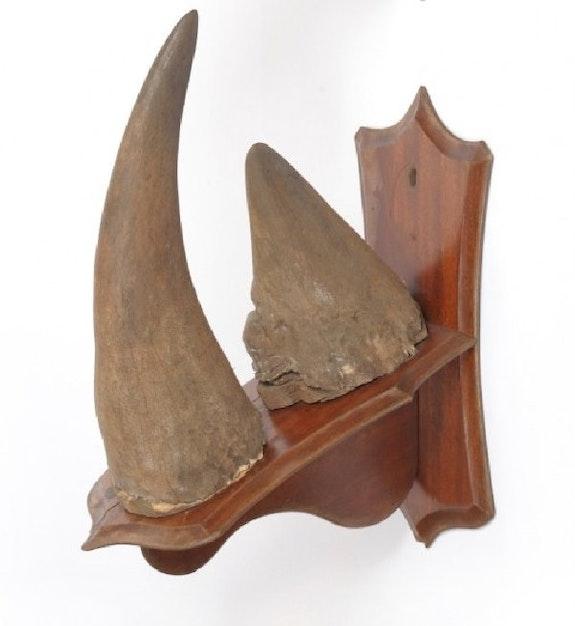 Rhino Horn for sale. Lissa Lissa Ethel
