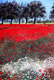 Mohnfeld in der Toscana. Ingrid Rigot