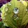 Jour de pluie… {Les diamants}. Janeon Photos