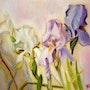 Les 3 iris. Yokozaza